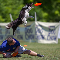 istvan Fodor of Hungary competes with his dog Fany during the Flydogs Extreme Distance Frisbee European Championships held in  Budapest, Hungary. Saturday, 16. June 2012. ATTILA VOLGYI