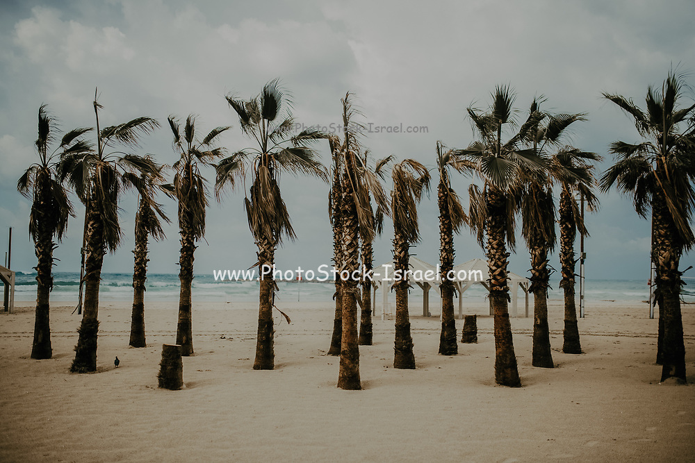 Moody image of palm trees on a beach. Photographed in Tel Aviv, Israel