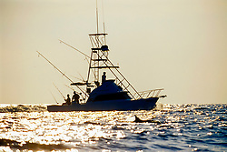 Long-snouted Spinner Dolphin, Stenella longirostris, leading the way for sport fishing boat at sunset, Kona, Big Island, Hawaii, USA, Pacific Ocean