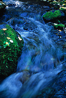 Stream flowing past fallen aspen leaves