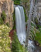 Tumalo Falls and Fir Snag,<br /> Deschutes National Forest, <br /> Deschutes County, Oregon