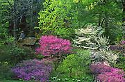 Redbuds, Dogwoods, Springtime, Morris Arboretum of the University of Pennsylvania, Chestnut Hill, Philadelphia, PA Spring, Pennsylvania