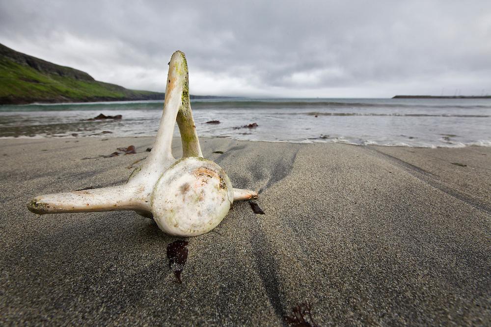 Sandoy Island, Faroe Islands.<br /> <br /> A pilot whale vertebrae sits on a grindadráp killing beach.