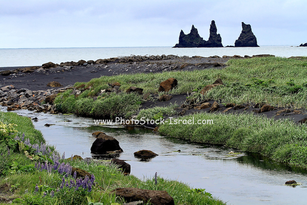 The Reynisdrangar sea stacks near Vik in the southern coast of Iceland , Southern Iceland
