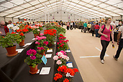 Harrogate Flower Show, North Yorkshire, England, UK. The Plant Pavilion is full of every variety of flowering plant you can think of, with blooms of all shapes, sizes and colours.