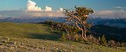 View from Rattlesnake Mountain in the Absaroka Range of Northwest Wyoming