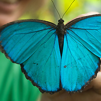 Gudrun Sperrer shows off a butterfly that she breeds at the Pilpintuwasi Butterfly Farm and Amazon Animal Orphange near Iquitos, Peru.