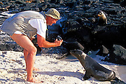 ECUADOR, GALAPAGOS ISLANDS eco-tourists photographing sea lions on Mosquera Island near Bartolome Zalophus californianus species