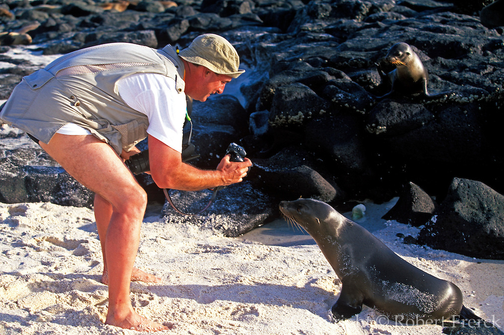 ECUADOR, GALAPAGOS ISLANDS eco-tourists photographing sea lions on Mosquera Island near Bartolome Zalophus californianus species