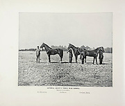 """General Grant's Three War Horses from The American Civil War book and Grant album : """"art immortelles"""" : a portfolio of half-tone reproductions from rare and costly photographs designed to perpetuate the memory of General Ulysses S. Grant, depicting scenes and incidents in connection with the Civil War Published  in Boston and New York by W. H. Allen in 1894"""