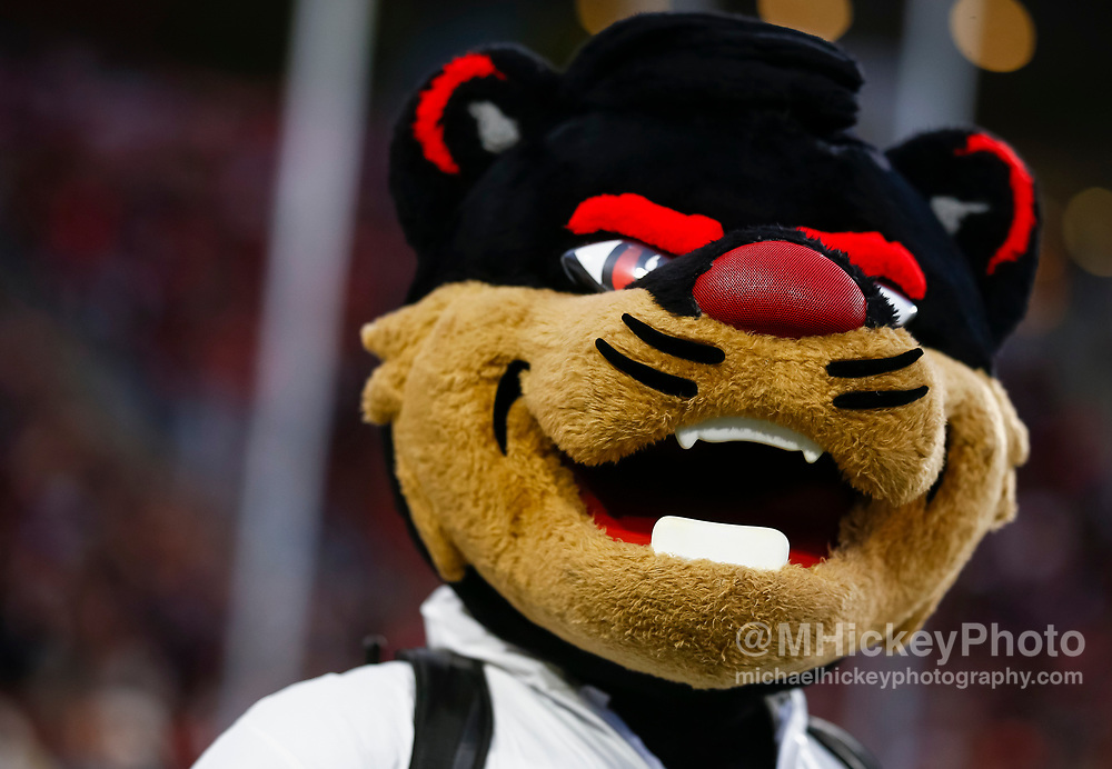 CINCINNATI, OH - OCTOBER 21: The Cincinnati Bearcats mascot is seen during the game against the Southern Methodist Mustangs at Nippert Stadium on October 21, 2017 in Cincinnati, Ohio. (Photo by Michael Hickey/Getty Images)