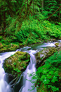 "Sol Duc Falls in Olympic National Park.  The name Sol Duc means ""magic waters"". The Sol Duc River is divided into 3 or 4 separate streams (depending on flow) by an irregular rocky ledge. The water drops about 25 feet over the ledge into a tight cleft, making a 90 degree angle turn. The river passes beneath a footbridge, then drops about 10 feet into a deep teal pool."