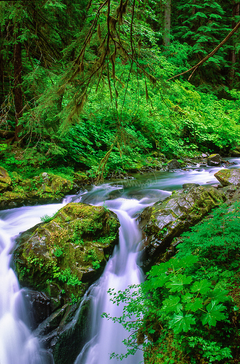"""Sol Duc Falls in Olympic National Park.  The name Sol Duc means """"magic waters"""". The Sol Duc River is divided into 3 or 4 separate streams (depending on flow) by an irregular rocky ledge. The water drops about 25 feet over the ledge into a tight cleft, making a 90 degree angle turn. The river passes beneath a footbridge, then drops about 10 feet into a deep teal pool."""