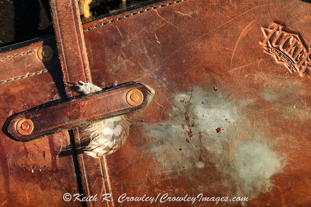 Sharptail feather and blood on a scabbard.