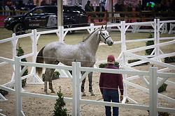 022, Nibali van het Eikenhof<br /> BWP Hengsten keuring Koningshooikt 2015<br /> © Hippo Foto - Dirk Caremans<br /> 21/01/16
