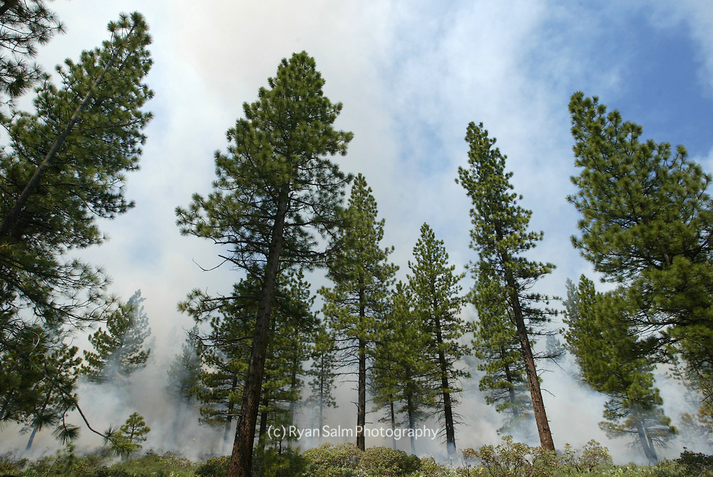 Dense smoke fills up the forest as a nearby prescribed fire burns in Lake Tahoe.