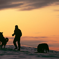 A musher feeds his dog team on Great Slave Lake in Canada's Northwest Territories.