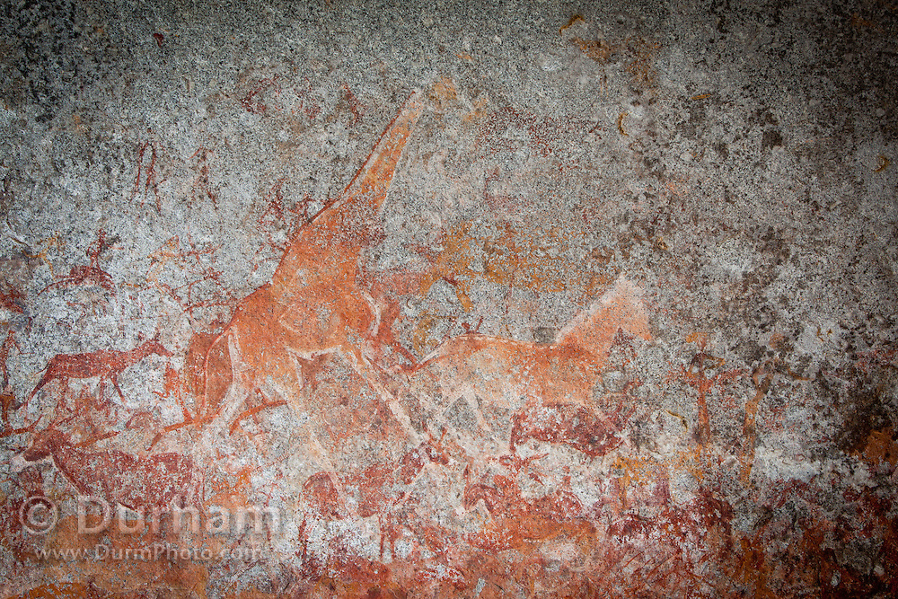 A giraffe and other wildife depicted in San bushman rock paintings, estimated at around 2000 years old, in Nswatugi Cave in Matobo National Park, Zimbabwe.