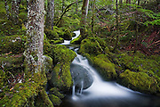A mountain stream cascades through lush forest and moss covered boulders in North Cascades National Park, Washington.