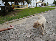 Chrissy Beckles coaxes a stray dog found on Guayanes Beach to come to her. The small female was living on scraps  left over from beach visitors.