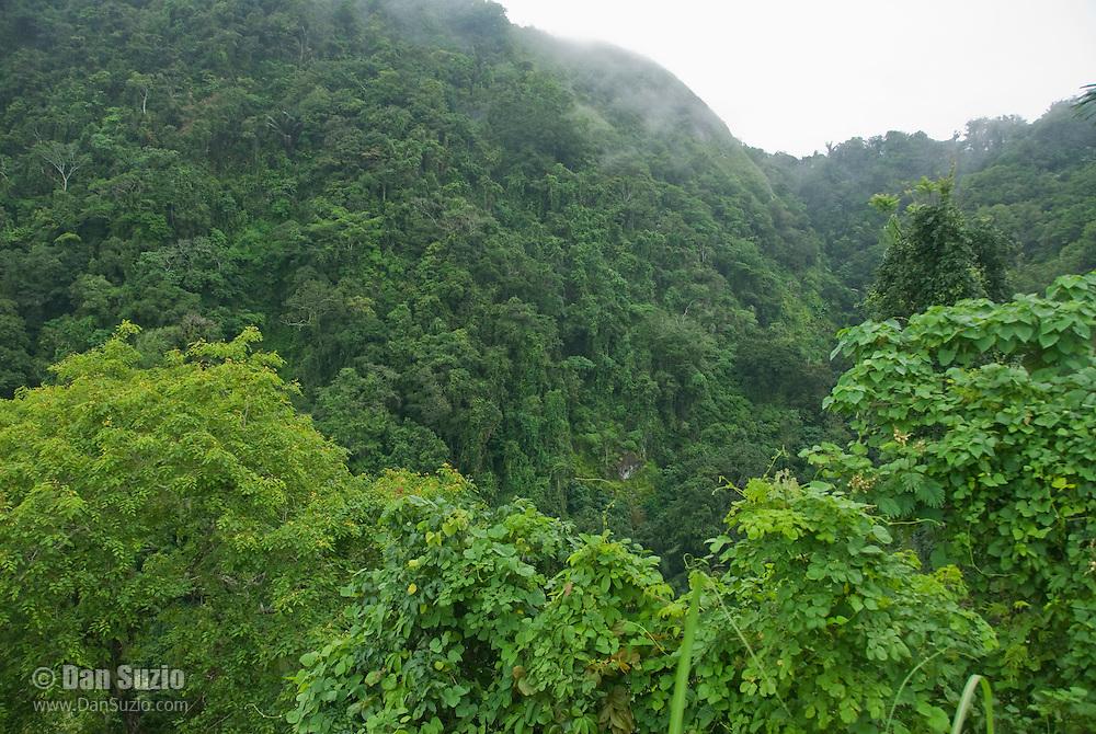 Fog and forest on upper slopes of Mount Manucoco, Atauro Island, Timor-Leste (East Timor)