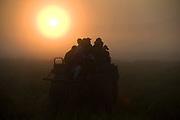 Silhouette at sunrise, Mahout and Asian Elephants carrying tourists, Elephas maximus, Kaziranga National Park, Assam, India, World Heritage & IUCN Category II Site, tourism, domestic