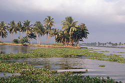 Backwaters of Kerala near Aleppey; India; with house and palm trees,