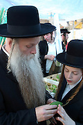 Israel, Jerusalem, Me'a She'arim, Orthodox Jew and his son examining the Etrog to verify its quality. Of the many symbols associated with Sukkot the most important are the Four Species. For any of the 4 species to be used for the religious ritual they must be up to speck.