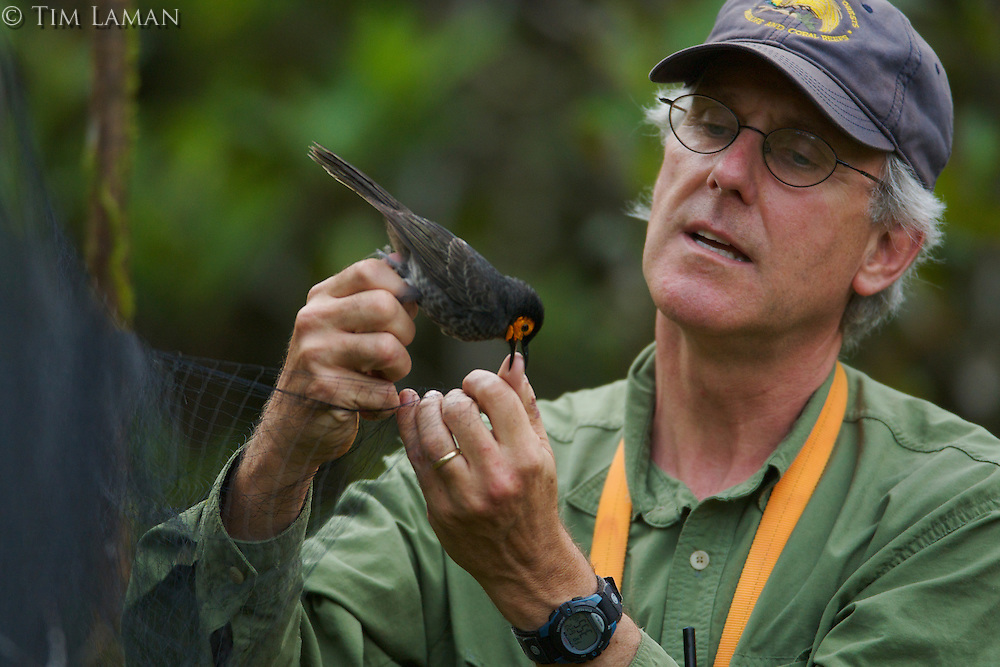 Bruce Beehler has just captured a Wattled Smoky Honeyeater (Melipotes carolae), a new species of bird he discovered in the Foja Mts. in 2005.