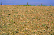 AREKJC Field of freshly cut summer hay and blue sky, Burrow Hill, Suffolk, England