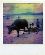 Old Polaroid of kids playing on a wagon without wheels being pulled by a buffalo,  Palawan Island, Philippines, Southeast Asia
