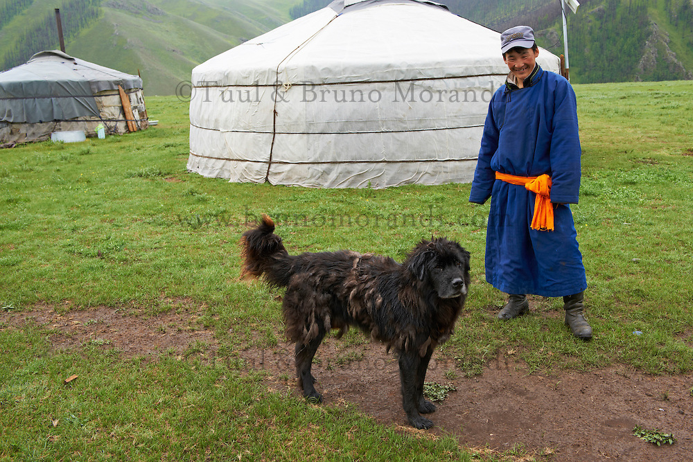 Mongolie, Province de Ovorkhangai, Vallee de l'Orkhon, campement nomade, chien de race Bankhar // Mongolia, Ovorkhangai province, Okhon valley, Nomad camp, Bankhar dog race