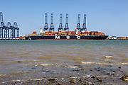 MSC Regulus container ship Trinity Terminal, Port of Felixstowe, Suffolk, England, UK