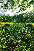 A lush green landscape near My Son, Vietnam.