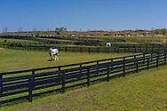 Horses, Two Trees Farm, Bridgehampton, NY