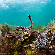 Eleuthera Island in the Bahamas has almost 200 in-land ponds. Some of these hold amazing treasures like a yet-to-be described cave shrimp. One pond even holds the record for the highest density of seahorses in the world. All of the ponds are under threat from development, invasive species and pollution. Protections are desperately needed.