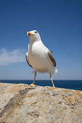 Close-up of seagull perching on harbour wall by sea, Puglia, Italy