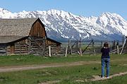 Tourist Taking Photos at Mormon Row, Grand Teton National Park