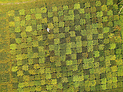 SHANGHAI, CHINA - OCTOBER 13: (CHINA OUT) <br /> <br /> Map Of China Grown In Rice Field<br /> <br /> Aerial view of a colourful rice carpet planted in the field in Zhonghong village on October 13, 2015 in Shanghai, China. Chen Jinxiang, retired from an agrotechnical station, cultivated over 30 kinds of rice with different colours and shapes. Chen used colourful rice to plant a map of China and colourful carpets in the fields in Shanghai.<br /> ©Exclusivepix Media