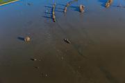 Nederland, Gelderland, Brummen  20-01-2011; .Vaargeul in de IJssel met hoogwater. Toppen van bomen markeren de oever. Fairway in the river with flood waters. Tops of trees mark the bank..luchtfoto (toeslag), aerial photo (additional fee required).copyright foto/photo Siebe Swart