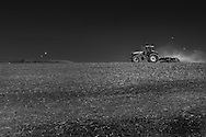 A tractor lifts the chaff in a field near the Military Road, West Wight, Isle of Wight