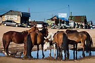 Horses gather around a puddle at a small town in Övörkhangai Province, Mongolia.