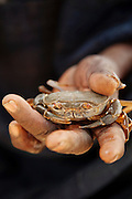 A crab sorcerer in the village of Rhumsiki, Cameroon. Villagers believe he can order the crab to answer questions asked