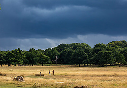© Licensed to London News Pictures. 24/08/2020. London, UK. As walkers enjoy the mild temperatures this afternoon in Richmond Park, dark clouds loom over South West London as forecasters warn that Storm Francis is set to batter the UK later to night with winds in excess of 50mph along with heavy rain. The Met Office has issued a yellow weather warning for high winds for most of the country which could lead to travel disruption and damage to trees. Photo credit: Alex Lentati/LNP