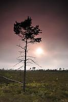 Burned forests in bog, Slitere National Park, Latvia