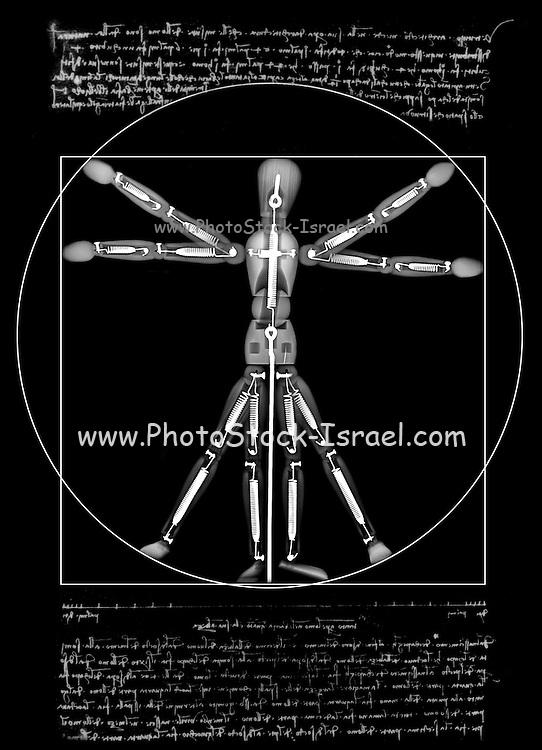 Vitruvian Man a mannequin under x-ray