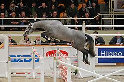 Gentleman<br /> BWP Hengstenkeuring Moorsele 2009<br /> Photo © Hippo Foto