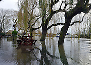 © Licensed to London News Pictures. 26/11/2012. Oxfordshire, UK The Rose Revived public house is surrounded by the floodwater from the River Thames in Witney, Newbridge. Flooding on the River Thames today 26th November 2012 in Oxfordshire. Photo credit : Stephen Simpson/LNP