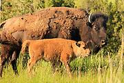 Spring on the National Bison Range