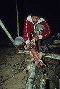 PENAN, MALAYSIA. Sarawak, Borneo, South East Asia.Penan skinning wild animal.Tropical rainforest and one of the world's richest, oldest eco-systems, flora and fauna, under threat from development, logging and deforestation. Home to indigenous Dayak native tribal peoples, farming by slash and burn cultivation, fishing and hunting wild boar. Home to the Penan, traditional nomadic hunter-gatherers, of whom only one thousand survive, eating roots, and hunting wild animals with blowpipes. Animists, Christians, they still practice traditional medicine from herbs and plants. Native people have mounted protests and blockades against logging concessions, many have been arrested and imprisoned.